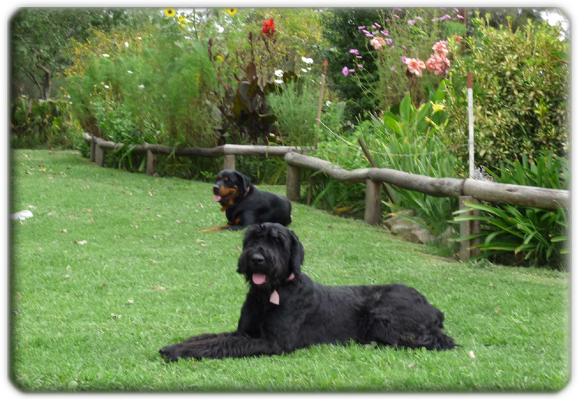 """El Pensionado Canino """"Las Cañuelas"""" es un emprendimiento familiar"""